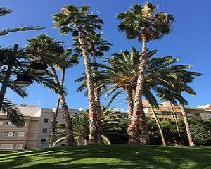 Jardines Las Palmas GC Marieta 2017-2-2